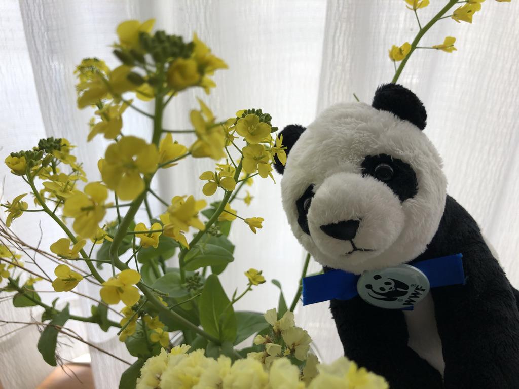 アースアワー2021 #旅するパンダちゃんまた来年!